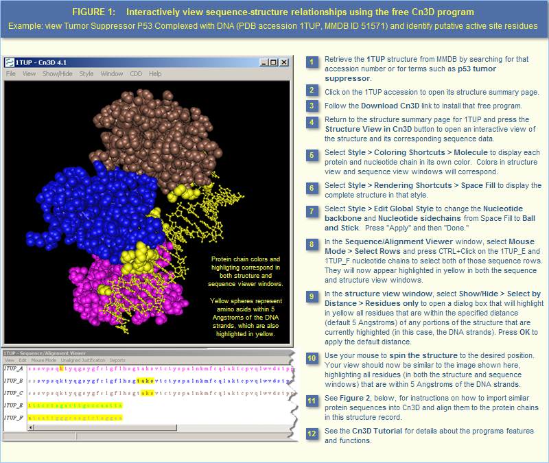 How To Use the Molecular Modeling Database (MMDB): view 3D