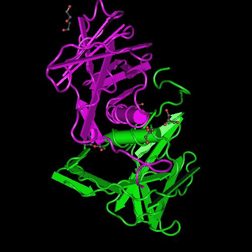 5C94: Infectious Bronchitis Virus Nsp9