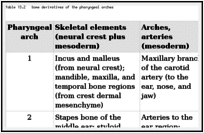 Table 13.2. Some derivatives of the pharyngeal arches.