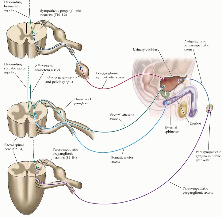 Sphincter Stretching http://www.pharmacistsworld.com/forum/showthread.php?p=120024