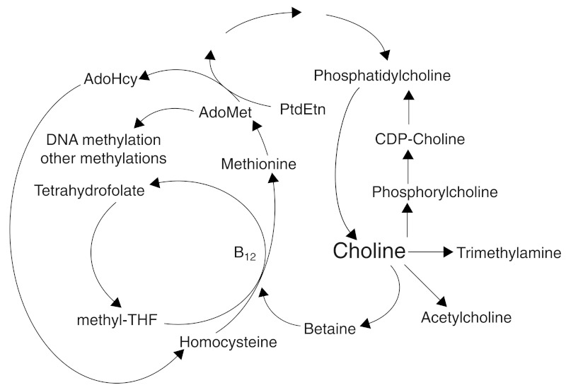FIGURE 12-1. Choline, folate, and methionine metabolism are closely interrelated.
