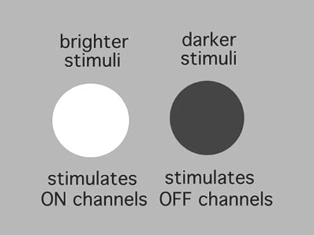 Figure 9. Stimuli for ON and OFF center channels.