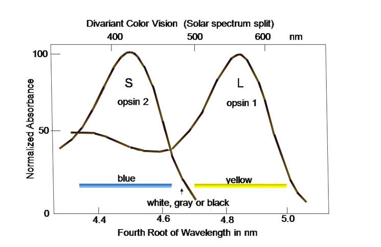 Figure 3 The Normalized Absorption Spectra Of Webvision