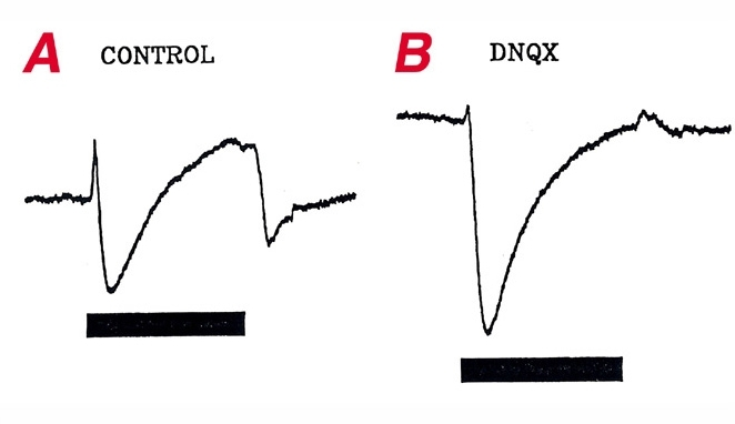 Figure 12, [The effects of DNQ...