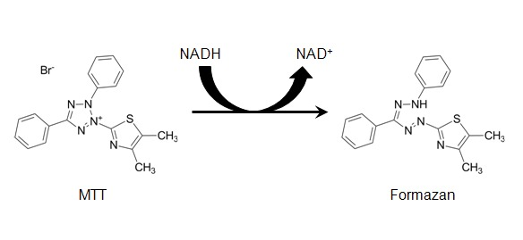 Figure 1: [Structures of MTT and colored formazan product ...