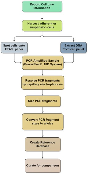 authentication of human cell lines by str dna profiling analysis