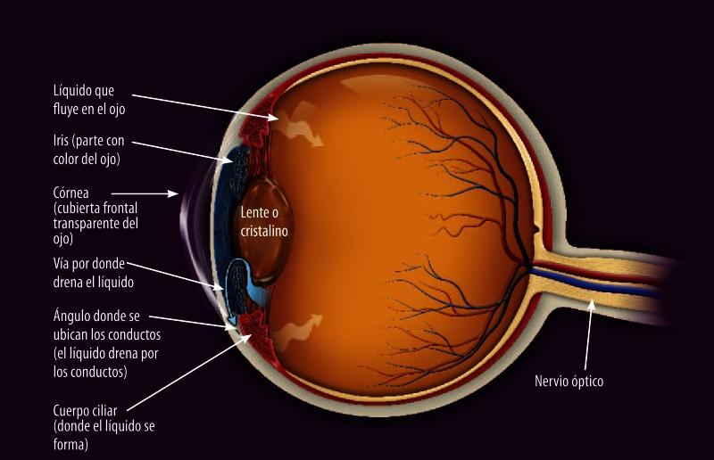 Tratamientos Para El Glaucoma De ángulo Abierto Las Guías Sumarias De Los Consumidores Ncbi Bookshelf