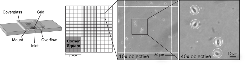 Figure 4, Hemocytometer used for counting cells  - WormBook