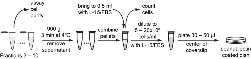 Cell isolation and culture - WormBook - NCBI Bookshelf