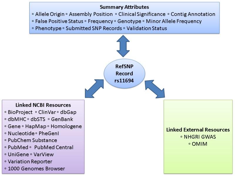 Figure 2 The Refsnp Summary Record Refsnp The Ncbi