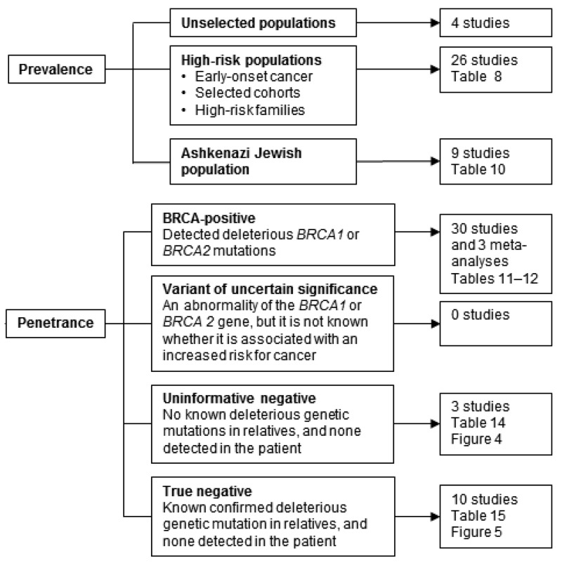 Figure 2 is a flow diagram of included studies about prevalence and penetrance. The studies are of asymptomatic women. Studies of asymptomatic women and prevalence are divided into 3 categories: unselected population, with 4 studies; high-risk population, including early-onset cancer, selected cohorts, and high-risk families, with 26 studies; and Ashkenazi Jewish population, with 9 studies. Studies of asymptomatic women and penetrance are divided into 4 categories: BRCA-positive women, meaning they have detected deleterious BRCA1 or BRCA2 mutations, with 30 studies and 3 meta-analyses; variant of uncertain significance, meaning an abnormality of the BRCA1 or BRCA2 gene, but it is not known whether it is associated with an increased risk for cancer, no studies; uninformative negative, meaning no known deleterious genetic mutations in relatives, and none detected in the patient, with 3 studies; and true negative, meaning known confirmed deleterious genetic mutation in relatives and none detected in the patient, with 10 studies.