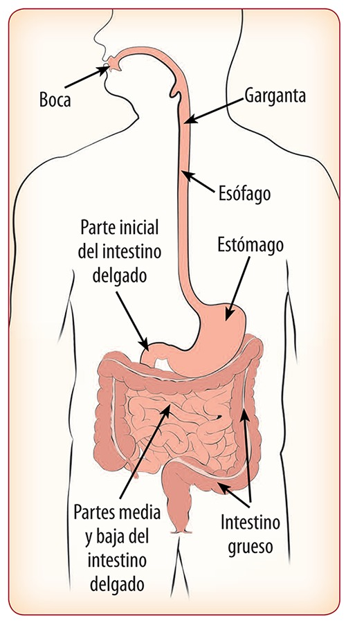 Operacion al estomago para bajar de peso