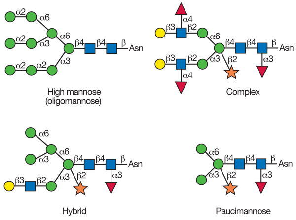 FIGURE 22.1. Types of N-glycans found in plants.