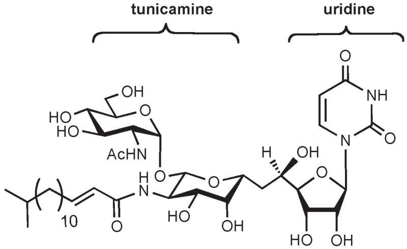 FIGURE 50.1. Structure of tunicamycin, which consists of uridine conjugated to the disaccharide, tunicamine.