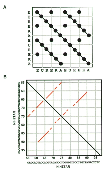 Figure 3. Dot matrix analysis illustrating direct (A) and inverted (B) repeats.