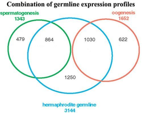 Figure 2 Venn Diagram Of Germline Gene Sets Wormbook Ncbi Bookshelf