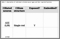 The sensory cilia of Caenorhabditis elegans - WormBook