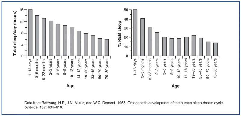 Figure 6. Average sleep need (left graph) and percentage of REM sleep (right graph) at different ages.
