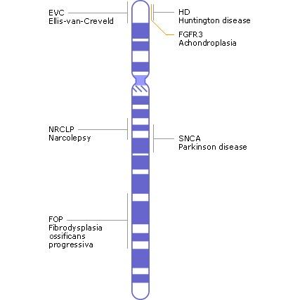 Chromosome Map - Genes and Disease - NCBI Bookshelf on cancer gene map, genome gene map, dna gene map, fruit fly gene map, crossover gene map, omim gene map, simple gene map, gene concept map, genetic map, hybrid gene map, human gene map,