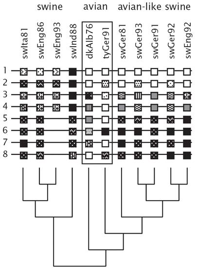 Figure 11.4. Phylogeny of influenza isolates based on nucleotide sequences from the HA1 region of the hemagglutinin (HA) gene.