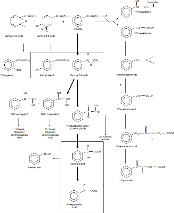 FIGURE 3-1. Primary metabolic pathways of styrene.