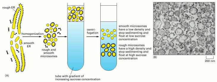Molecular Biology term wikipedia