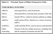Table 6-1. Principal Types of RNAs Produced in Cells.