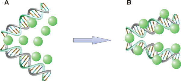 Figure 4. A model for the behavior of chromatin proteins during embryonic stem cell differentiation.