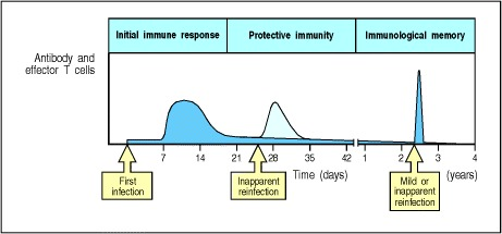 Figure 10.16. Protective immunity consists of preformed immune reactants and immunological memory.