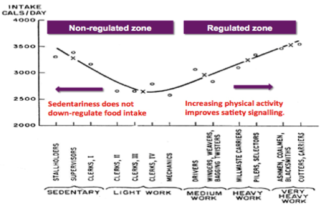 Figure 2: Regulated and non-regulated zones of appetite with varying levels physical activity. Model based on Jean Mayer's study in Bengali jute mill workers (78). Previously published in Blundell (79).