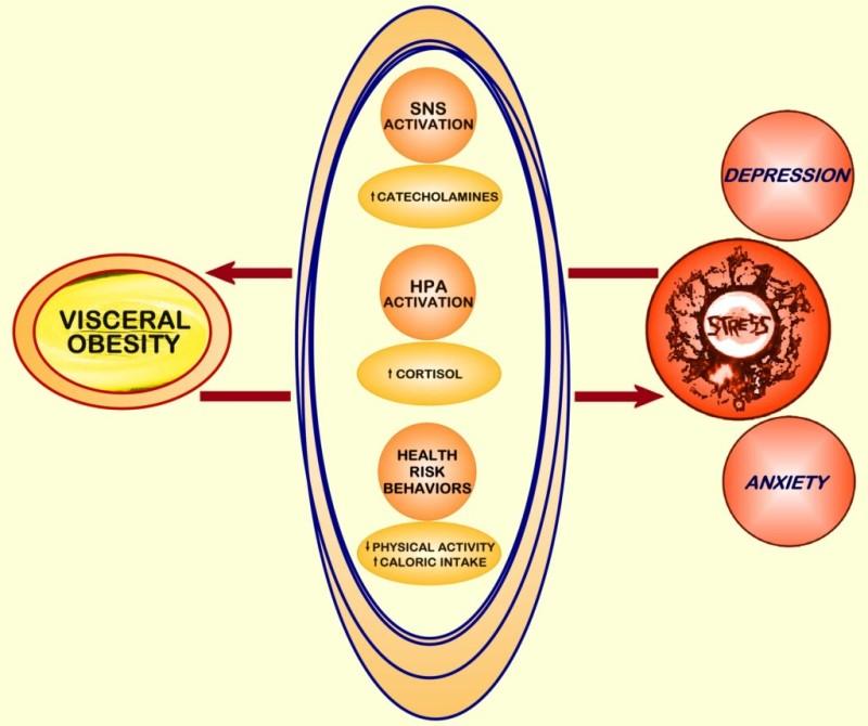 Clinical Problems Caused By Obesity Endotext Ncbi Bookshelf