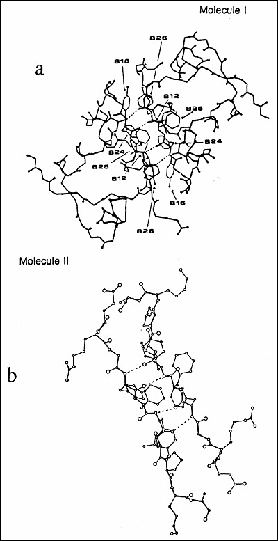 Insulin Biosynthesis Secretion Structure And Structure Activity