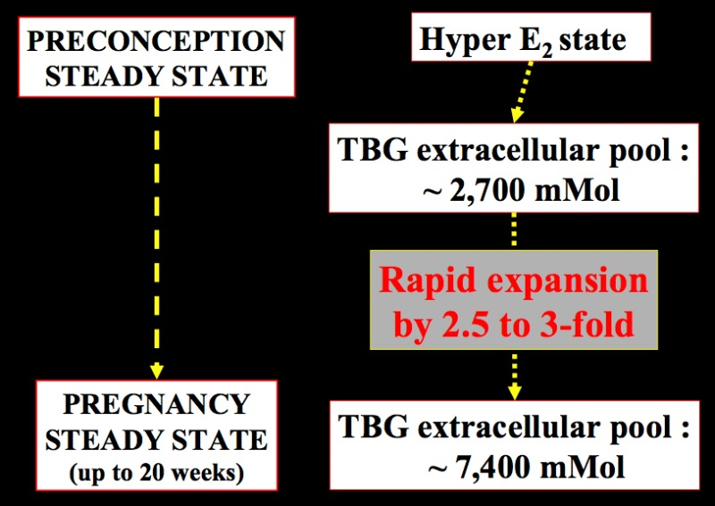 Thyroid Regulation and Dysfunction in the Pregnant Patient