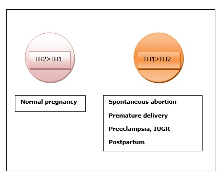 Figure 1. . Th1/Th2 Balance During Pregnancy and Postpartum.