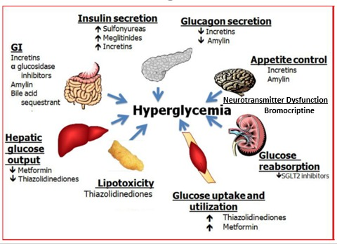 Oral And Injectable Non Insulin Pharmacological Agents For Type