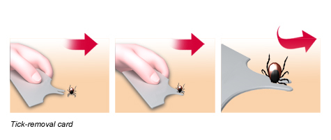 Illustration: Removal of a tick using a tick removal card – as described in the article