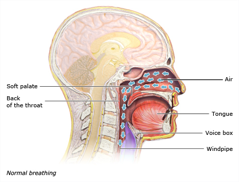 Illustration: Normal breathing