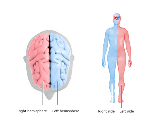 Illustration: Right and left hemisphere
