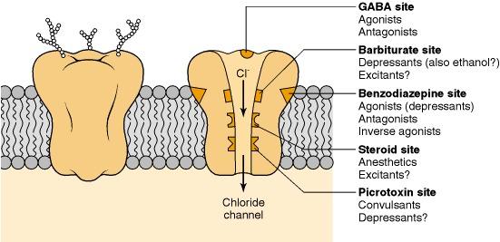 neurosteroids and epilepsy