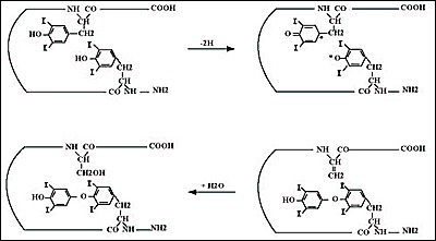 Fig. 2-10. Possible coupling reaction sequence.