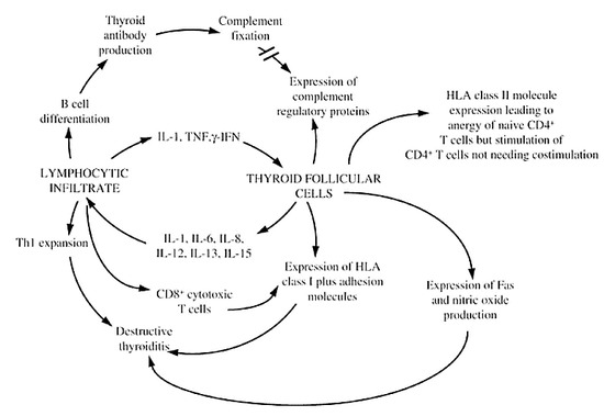 Autoimmunity To The Thyroid Gland Endotext Ncbi Bookshelf