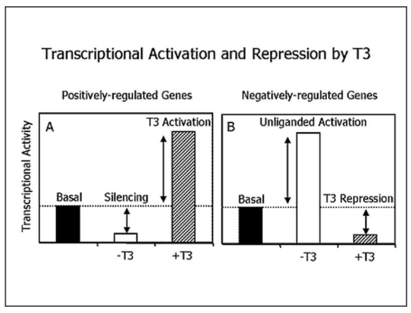 Cellular Action of Thyroid Hormone - Endotext - NCBI Bookshelf