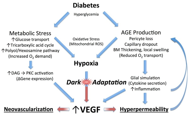 Figure 16 Diagram Of How Diabetes Leads To Vascular Changes In The