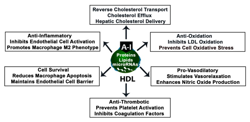 The Role of Lipids and Lipoproteins in Atherosclerosis