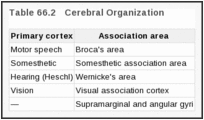 Table 66.2. Cerebral Organization.