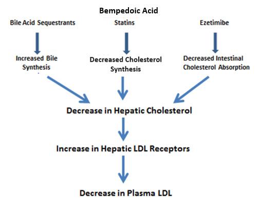 Cholesterol Lowering Drugs - Endotext - NCBI Bookshelf