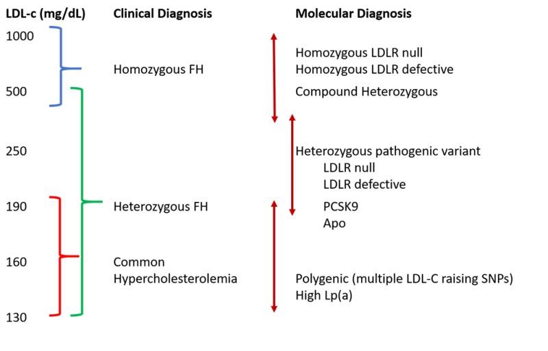 Genetics And Dyslipidemia Endotext Ncbi Bookshelf