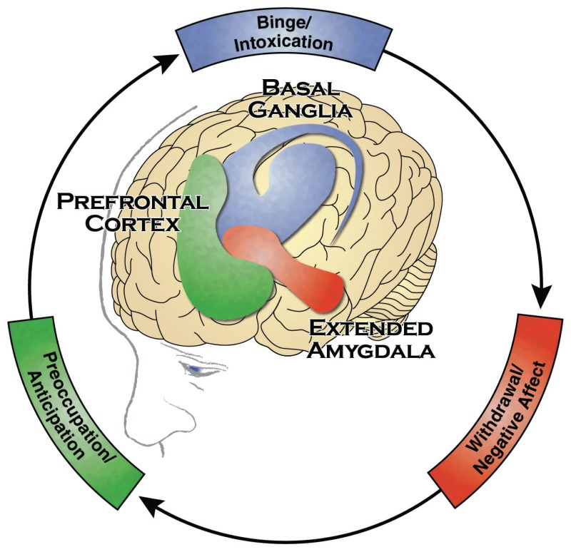 figure 2 3 the three stages of the addiction cycle and the brain