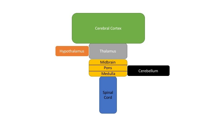 Figure Schematic Diagram Of The Major