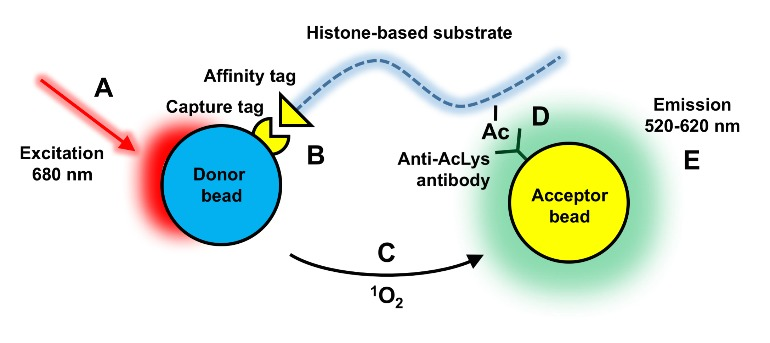Figure 8 Example Of An Alphascreen Based Hat Assay Guidance